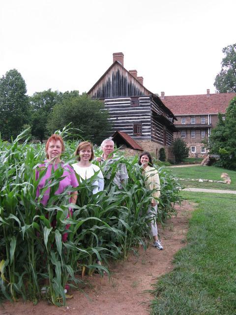 Summer corn, Old Salem, July 2008.